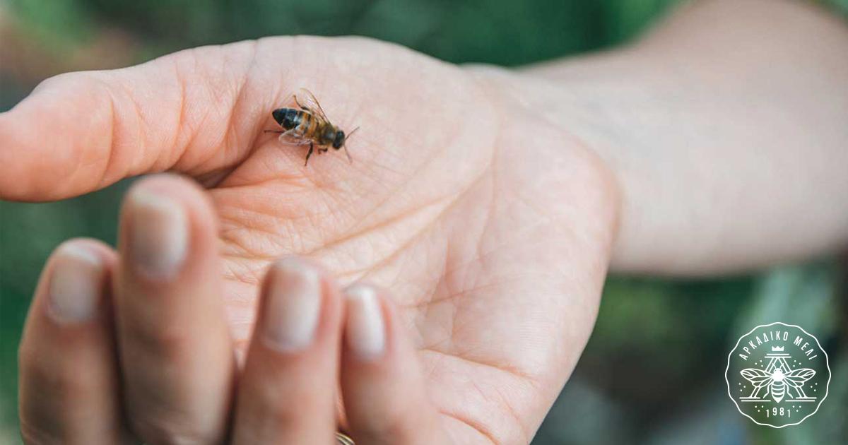Το Δηλητήριο Της Μέλισσας Με Απλά Λόγια