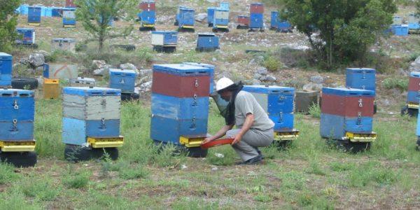 συλλογή γύρης Αρκαδικό Μέλι