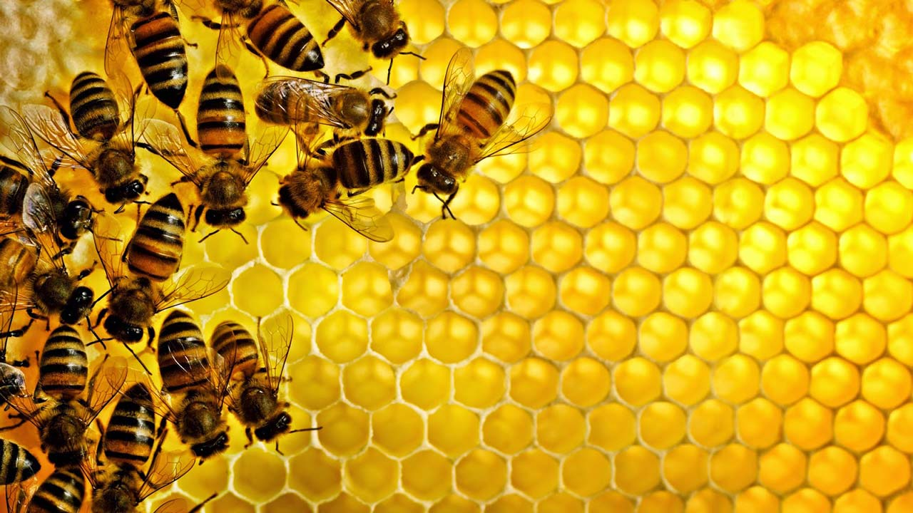 Μελισσοθεραπεία. Λίγα λόγια